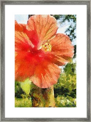 Zoo Flower Framed Print by Jeffrey Kolker