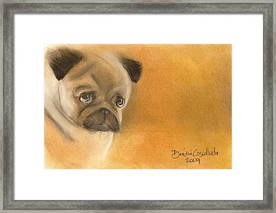 Zooey The Pug Framed Print by Dindin Coscolluela