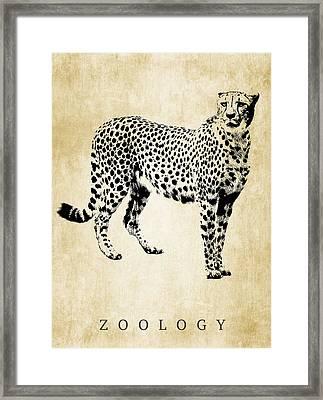 Zoology Poster Framed Print