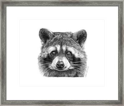046 Zorro The Raccoon Framed Print by Abbey Noelle