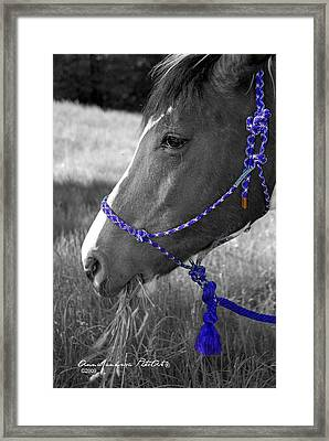 Zorro's Afternoon Snack Framed Print