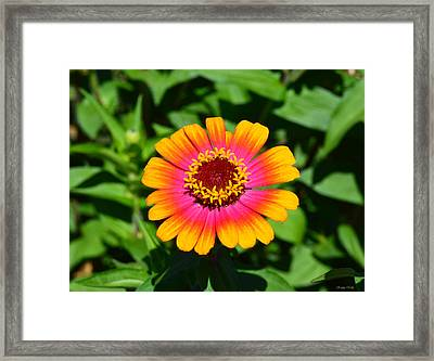 Flame On Framed Print by Kathy Kelly