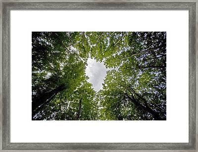 Zuflucht Framed Print
