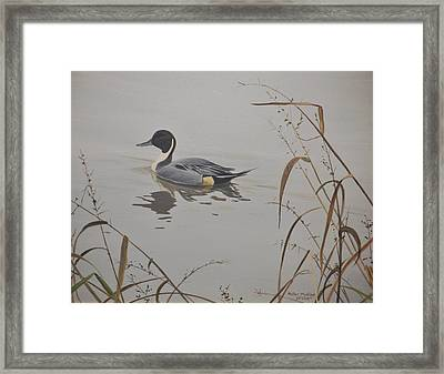 Framed Print featuring the painting Ankeny Pintail by Peter Mathios