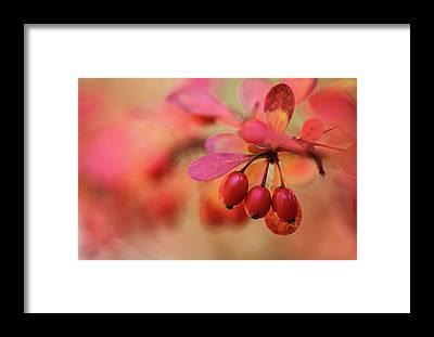Autumnal Framed Prints