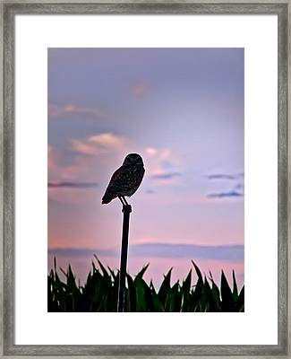 Burrowing Owl On A Stick Framed Print
