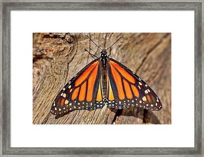 Butterfly Wings Framed Print