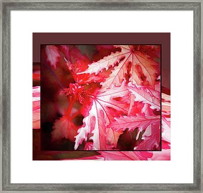Celebration - Framed Print