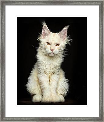 Framed Print featuring the photograph Creamy by Robert Sijka