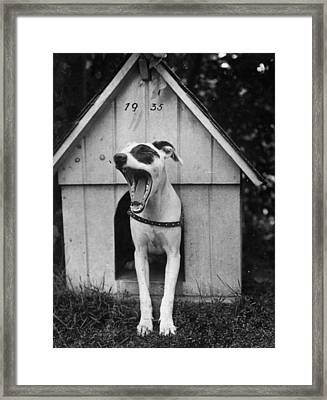 Dog Tired Framed Print by General Photographic Agency