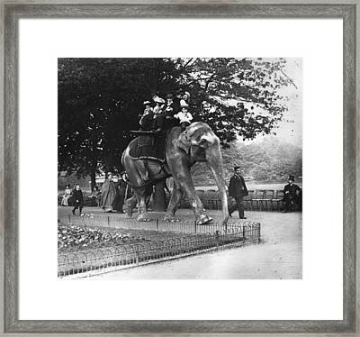 Elephant Ride Framed Print by Paul Martin
