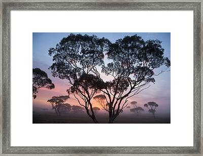Eucalyptus Trees And Bright Morning By Eastcott Momatiuk