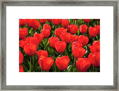 Europe, Germany, North Rhine Framed Print by Westend61