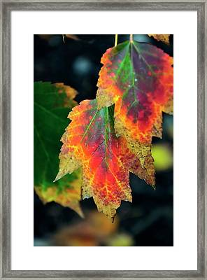 Framed Print featuring the photograph Fall Leaves 6072 by Jerry Sodorff