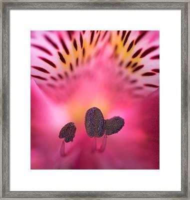 Framed Print featuring the photograph Flower Close Up by John Rodrigues