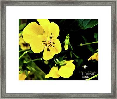 Flowers Hanging No. Hgf17 Framed Print