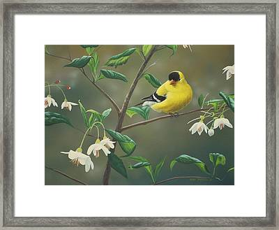 Framed Print featuring the painting Goldfinch And Snowbells by Peter Mathios