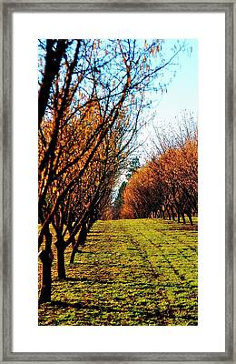 Framed Print featuring the photograph Hazelnut Orchard 21578 by Jerry Sodorff