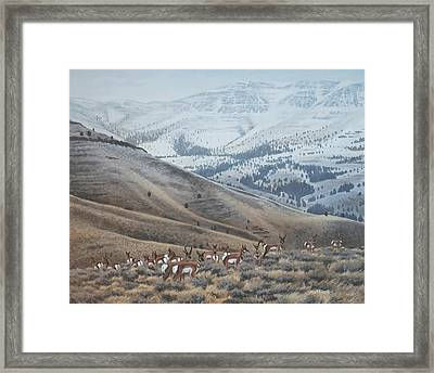 Framed Print featuring the painting High Country Pronghorn by Peter Mathios