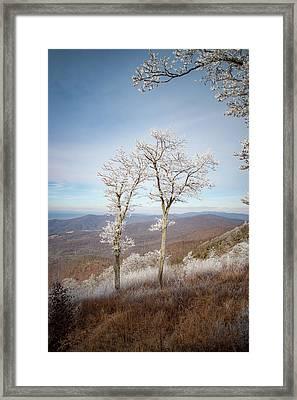 Hoarfrost Gathers Framed Print