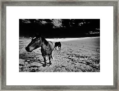 Framed Print featuring the photograph Horses On The Palouse by David Patterson