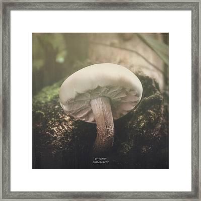 Look At The Mushroom Framed Print