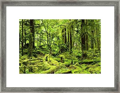 Lush Green Rain Forest Framed Print by Jordan Siemens