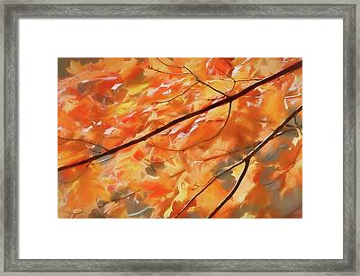 Framed Print featuring the photograph Maple Leaves On Fire by Rob Huntley