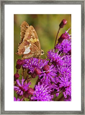 Moth On Purple Flowers Framed Print