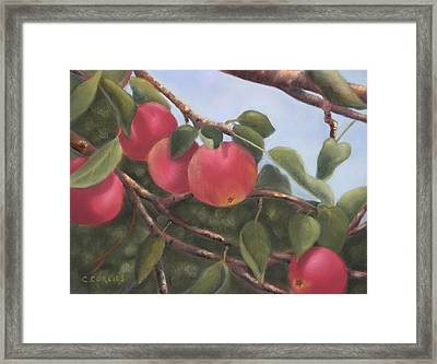 Perfect For Picking Framed Print