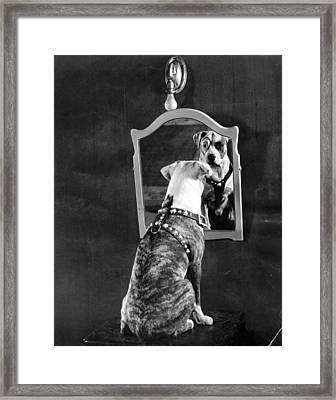 Pete The Pup Framed Print by General Photographic Agency