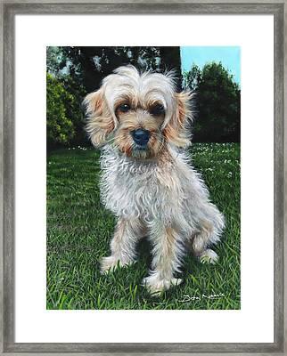 Portrait Of Toffee Framed Print