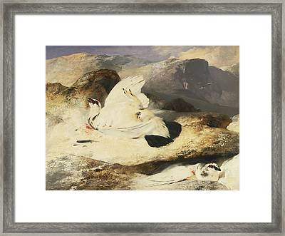 Ptarmigan In A Landscape Framed Print