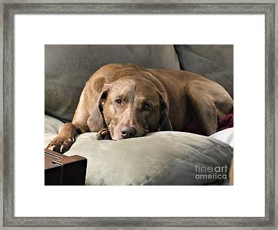 Framed Print featuring the photograph Reba by Rosanne Licciardi
