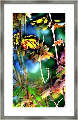Framed Print featuring the photograph Red Maple Yellow by Jerry Sodorff