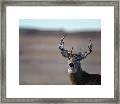 Rocky Mountain Deer Framed Print