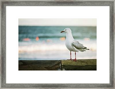 Framed Print featuring the photograph Seagull On The Beach. by Rob D