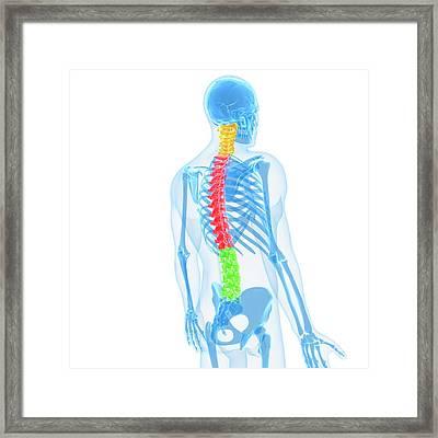Spine, Artwork Framed Print