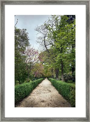 The Paths Of The Retiro Park Framed Print