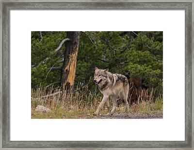 W1 Framed Print