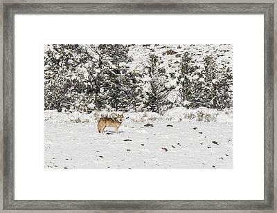 W16 Framed Print