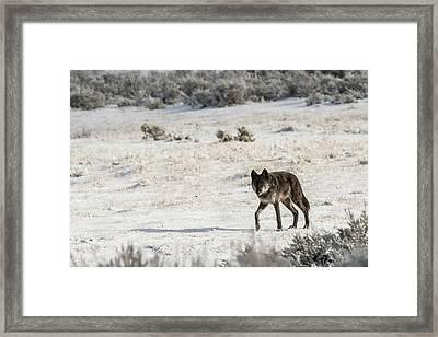 W19 Framed Print