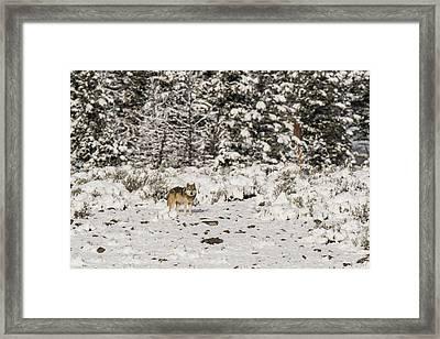 W20 Framed Print