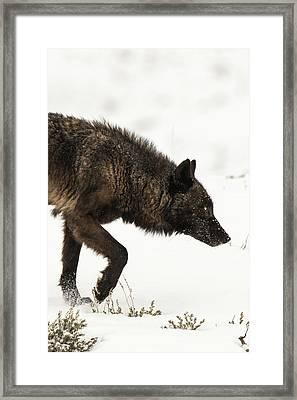 W46 Framed Print