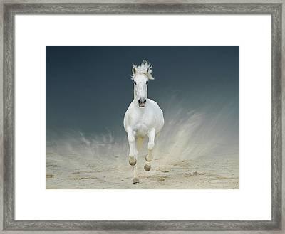 White Horse Galloping Framed Print by Christiana Stawski