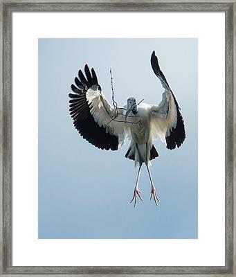 Woodstork Nesting Framed Print