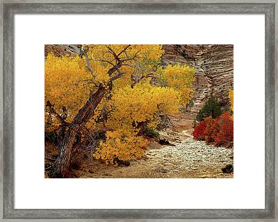 Zion National Park Autumn Framed Print