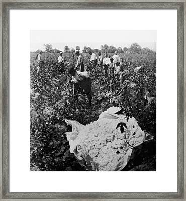 19th Century Cotton Picking Framed Print by Lightfoot