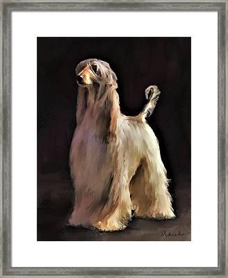 Afghan Hound Framed Print