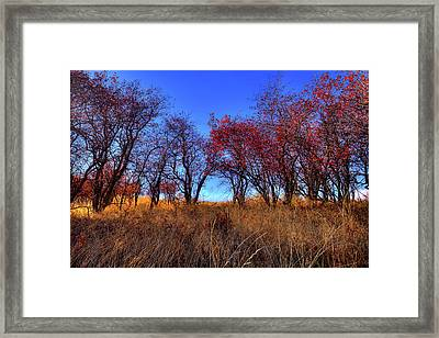 Framed Print featuring the photograph Autumn Light by David Patterson